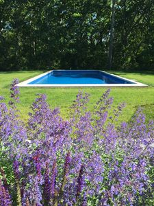 Photo for Escape to a beautiful sunny hamptons home with pool.