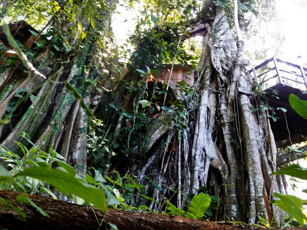Treehouse Pictures Enchanted Tree House Experience With Homeaway Cahuita