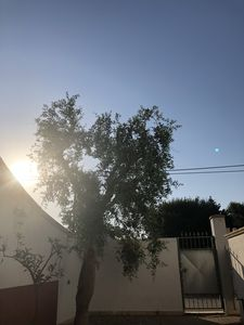 Photo for Three-room apartment in Residence, Salento Puglia.