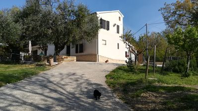 Photo for Under the Olive Tree, just 1km from the Rocca Roveresca di Mondavio.