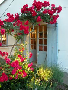 Roses at the kitchen door
