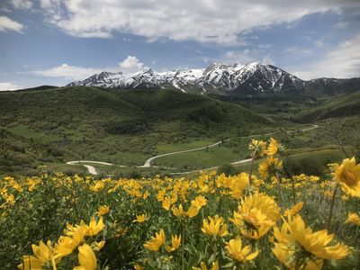 Utah's Switzerland! Access to hiking and biking trails yards away from our home.