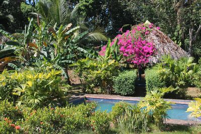 Private pool & yoga/hammok rancho surrounded by tropical flowers & no neighbours