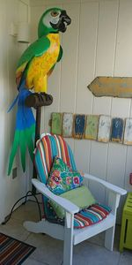 Photo for 'Parrot Paradise' Low Offseason Rates 3 min walk to the Beach 5 ⭐️ Reviews !