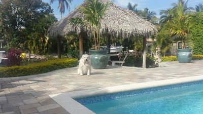 Photo for WINTER in PRIVATE Oasis, AMAZING pool deck~TIKI HUT~boat dock~WALK to 5thAve