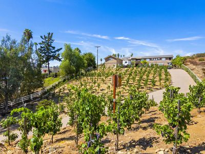 Photo for North County San Diego Private Estate Vineyard & Condo 1bedroom/1 bath