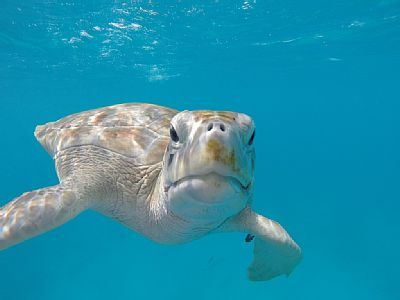Swim with the Turtles. This one is our favourite