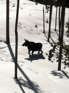 Photo for **Meet Our Moose!** New 3BD on Ski Bus Route! Great Views & Hot Tub