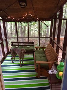 Gus on the screened in porch