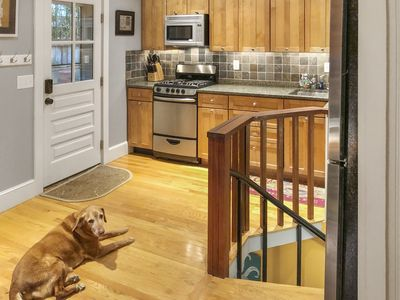 Kitchen, Entrance, and Rosie!