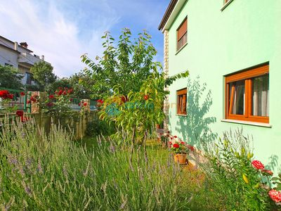 Photo for Apartment 390/887 (Istria - Stinjan), Budget accommodation, 700m from the beach
