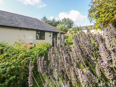Photo for Hazel Cottage, BUDE