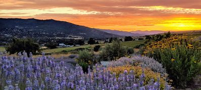 Photo for The Lavender Country Estate in Charming Ashland Oregon