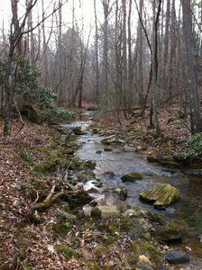 A back section of the creek.