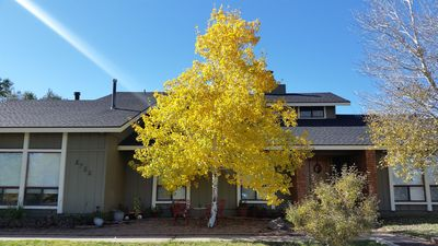Fall Aspen front of house