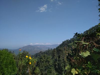 Photo for Himalayan View,Chirpy Morning