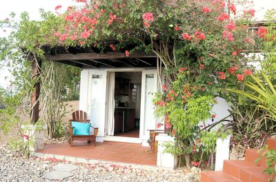 The bougainvillea covers the trellis creating a cool space to relax.
