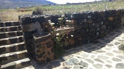 Photo for dammusino Kaffefi - immersed in the wild nature of pantelleria