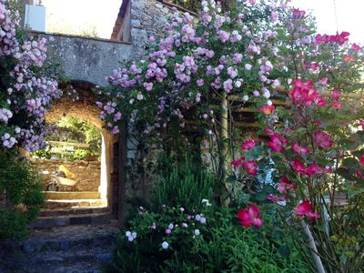 Photo for lovely cottage with small pool in the countryside around Lucca. Tuscany