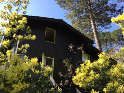 Photo for Wooden chalet on Lake Lacanau: a haven of peace in nature ...