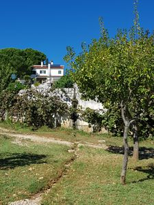 Photo for Quinta 15 minutes from Lisbon