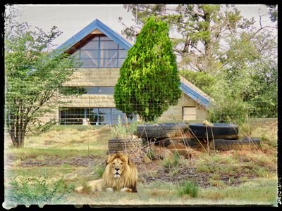 Photo for Lion Lodge @ggconservation