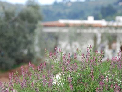 Photo for New homes in Peschici -Gargano -a few minutes from the sea