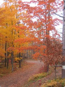 Looking for Fall Color?