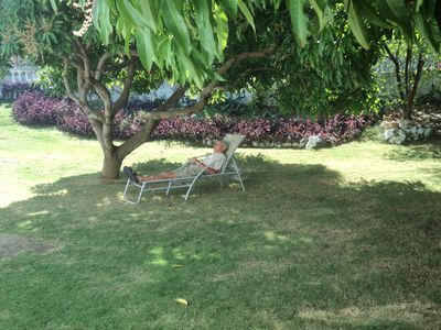 Guest relaxing under the mango trees.