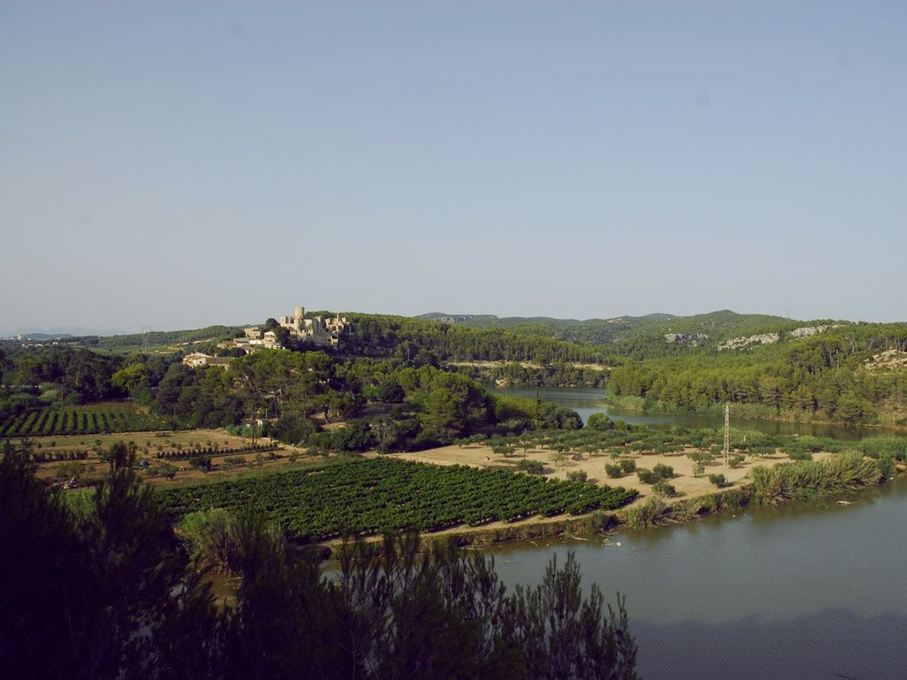 Milk Wood; middleage,vineyards and forests, near seaside, Sitges and Barcelona