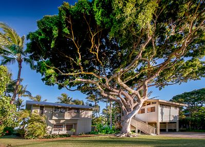 Beach Banyan on the left and annex 'Treehouse' on right. Big groups take both.