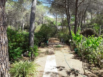 Photo for In the Gulf of Asinara, 400 m from the sea, a garden surrounded by a fantastic pine forest