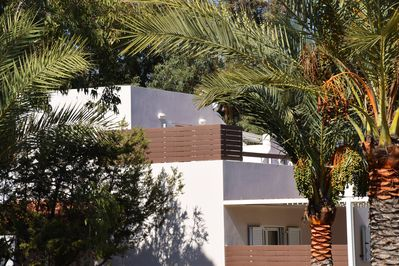 The villa, tucked among date palms.
