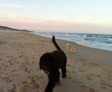 Photo for Doggy Holiday House Sunshine Beach