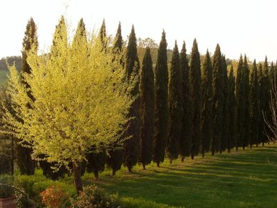 Photo for Tuscany portion of farmhouse exclusive use and cypress trees Val d'Orcia / Val di C