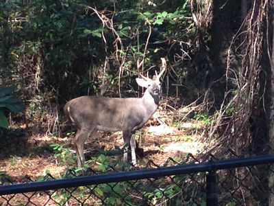 Now this is why we call it Deer Haven!