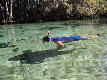 Springs at Kings Bay, Crystal River, FL, USA
