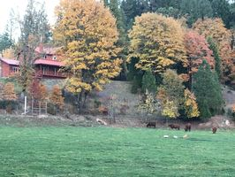 Photo for 3BR House Vacation Rental in White City, Oregon