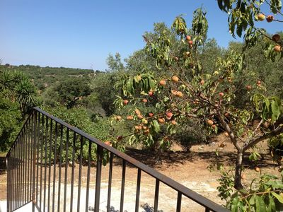 Photo for New apartment, large wooded property, Lumio (Calvi)