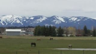 View of Whitefish Mountain Resort and open space from the backyard