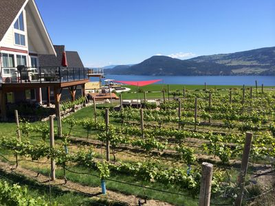 Vineyard and Lake View