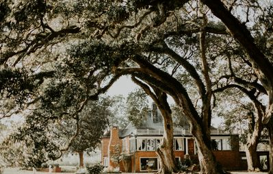 Our beautiful Oaks in the back of the Main House.