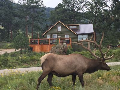360 Mountain Views and tons of wildlife!