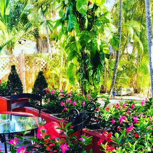 SPRING GARDEN OASIS ~ Just 5 minutes away from everything in Miami ~