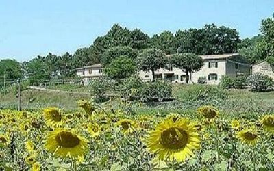 Photo for Holiday house with large pool and terrace close to the sea.  Short distance Pisa and Lucca