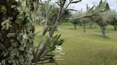 Photo for Live the tranquility and feel the nature of the Alentejo!