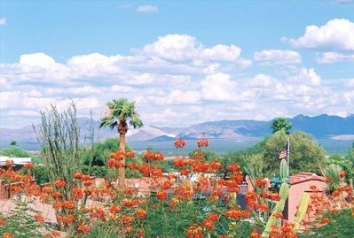 Mexican Bird of Paradise blooms at our entrance w/view of  the Santa Rita Mtns