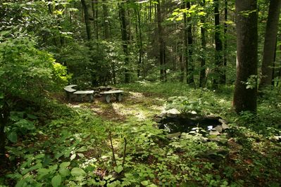 Summer woodland view showing fire circle and creek beyond.