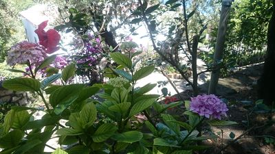 Photo for Villa Golconda - The chalet of harmony, colors and flowers in Sorrento