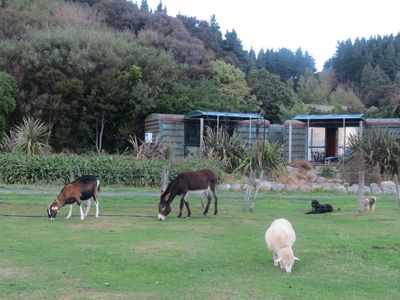 Te Rakau Cabins - a wildlife haven and retreat